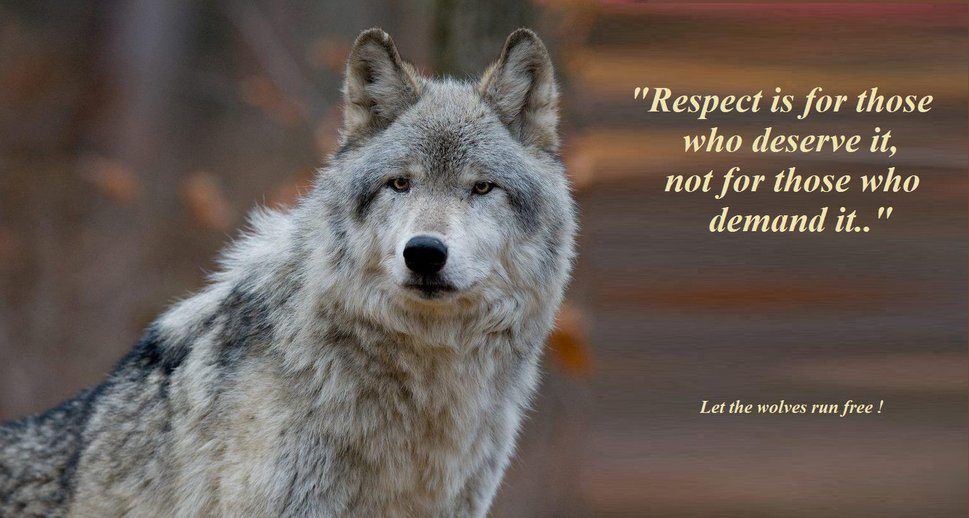 The Lone Wolf - As Leader, As Follower