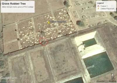 b2ap3_thumbnail_Grave-Robber-tree_20171103-010349_1.jpg