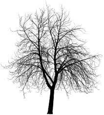 b2ap3_thumbnail_a-bare-tree.jpg