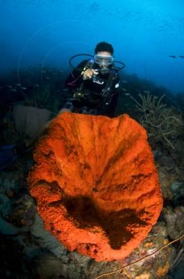 Scuba Diving In The Bubbles Of Jacques Cousteau