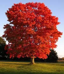 Dedication Trees