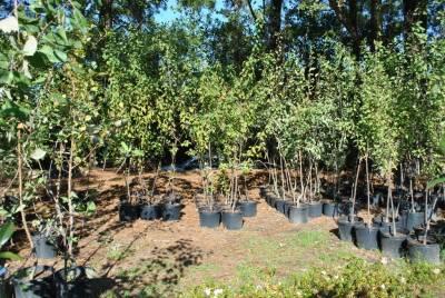b2ap3_thumbnail_seedling-nurseries.jpg